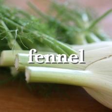 fennelx_Fotor