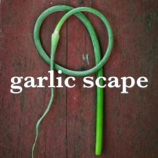 garlic scape_Fotor