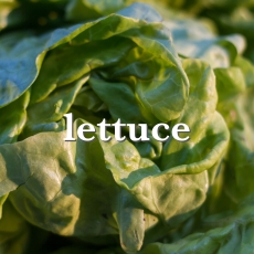 lettuce_Fotor