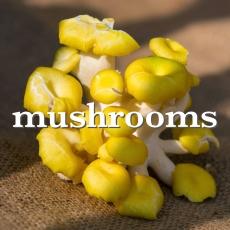 mushrooms_Fotor