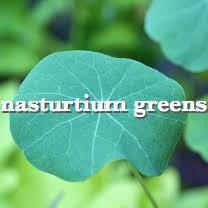nasturtium greensx_Fotor