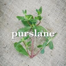 purslane_Fotor