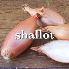 shallotx_Fotor