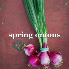 spring onions_Fotor